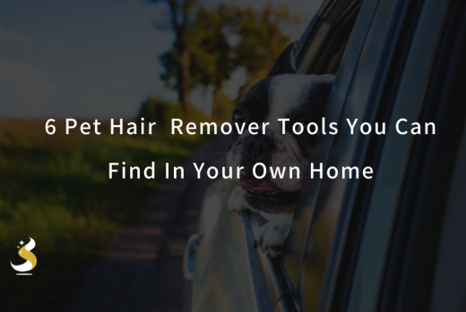 6 Excellent Pet Hair Remover Tools In Your Own Home