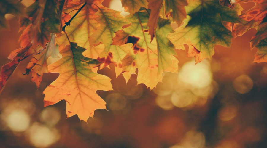 5 Ways To Keep Your Car Autumn-Ready
